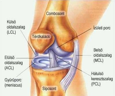 fájdalom a belső felület térdízületében ízületi javító kenőcs sérülés után