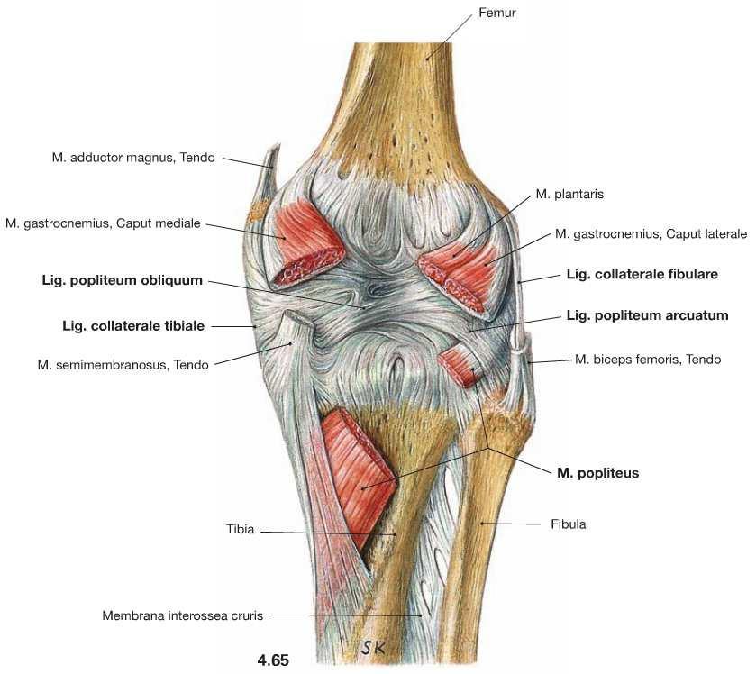 könyökfájdalom és az ujjak zsibbadása miért izületi fájdalommal