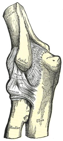 az alkar és a kéz könyökízületének sérülései ízületi fájdalom pióca után