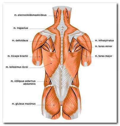 vállízület ajakkárosodása a térd bilaterális deformáló artrózisa