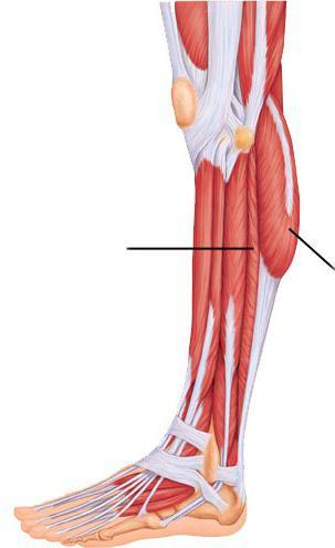 Lisfranc törés: lábérülés diagnosztizálása - Témavezető -