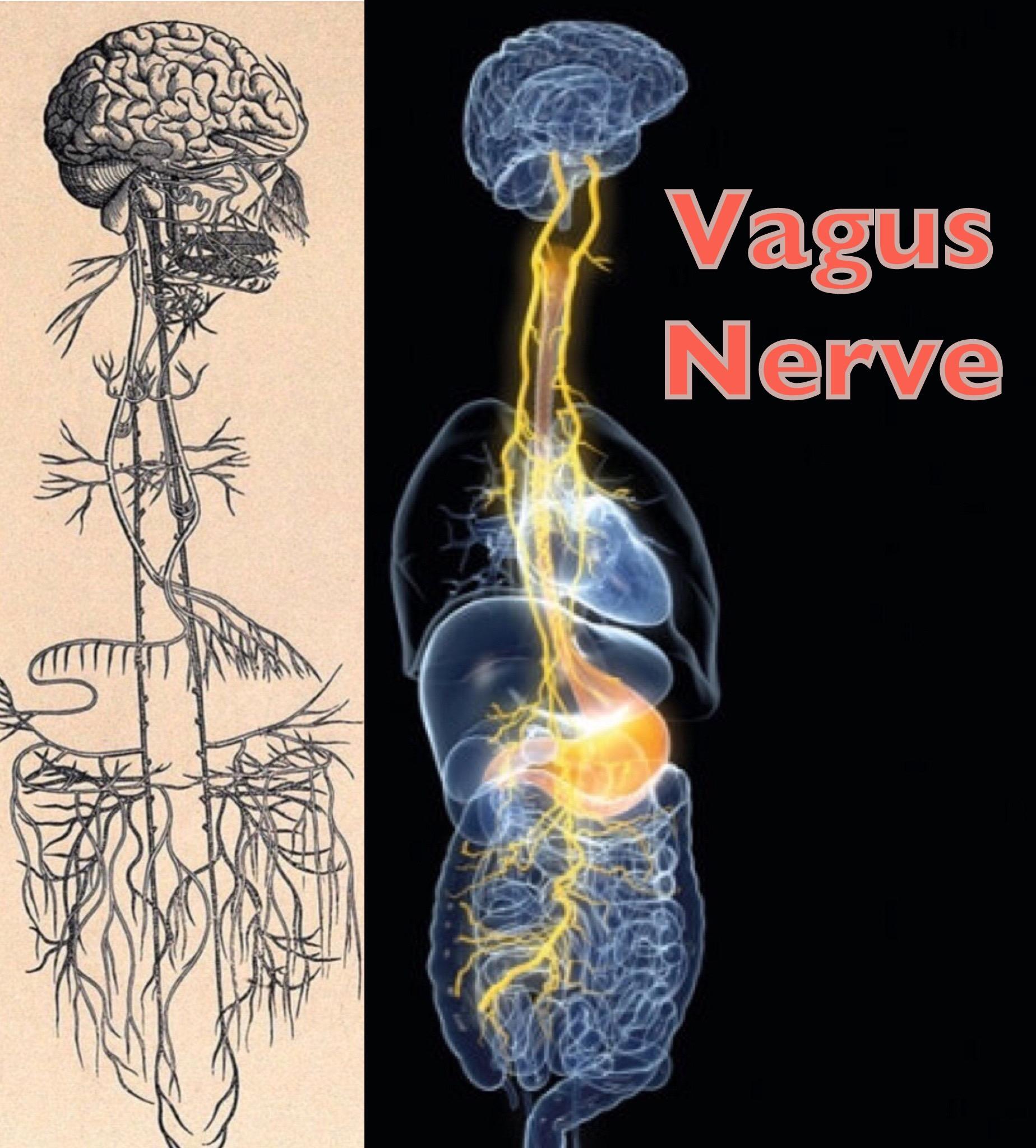vagus arthritis hogyan lehet kezelni