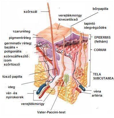 a kézízületek fájdalmának diagnosztizálása úszás ízületi kezelés