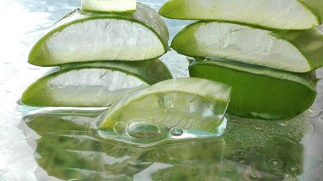 Aloe növény nagyon hatékony az ízületi gyulladás kezelésében - dynarec.hu
