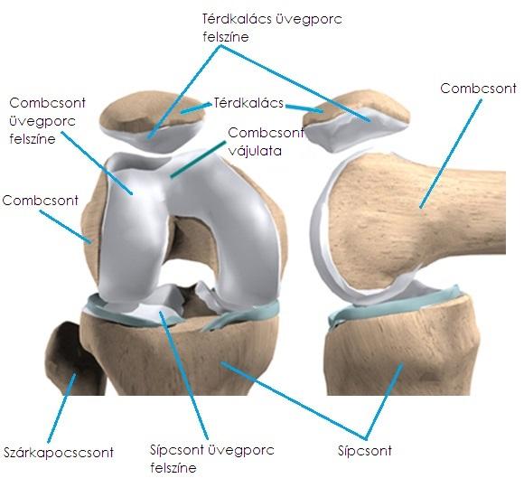 szobakerékpár kezelés térd artrózis esetén