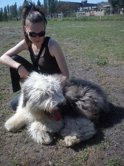 Csípő diszplázia a kutyáknál - Betegség, gyógyítás