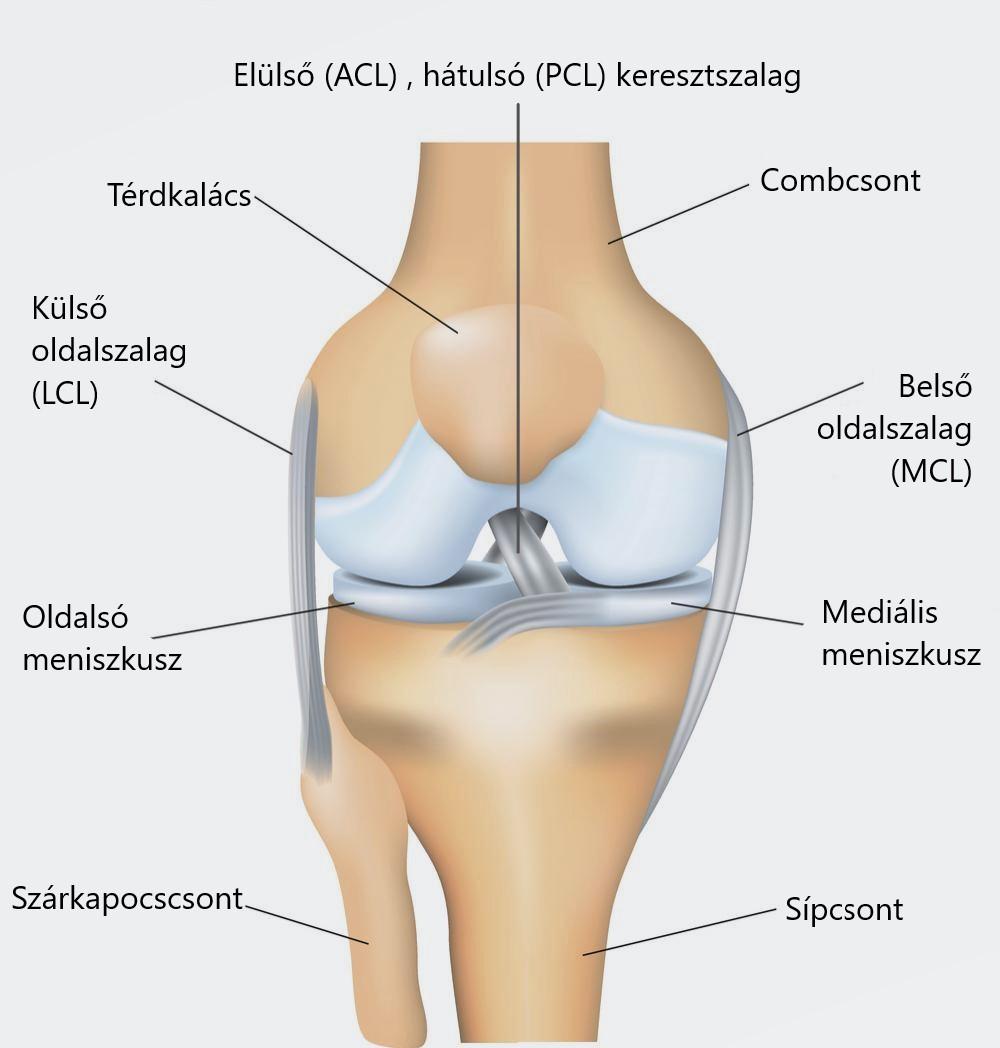 a térdízület alacsonyabb fáj éles fájdalom a csuklóízületben