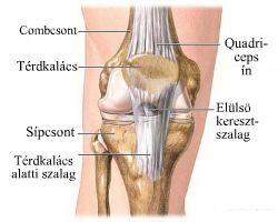 a vállízület sérülése esetén kötést kell felvinni gimnasztikus térdízületi osteoarthritis