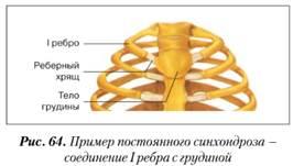 A csontok és a csontrendszer anatómiája | dynarec.hu