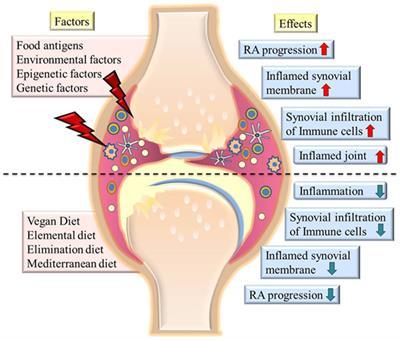 rheumatoid arthritis diet pubmed