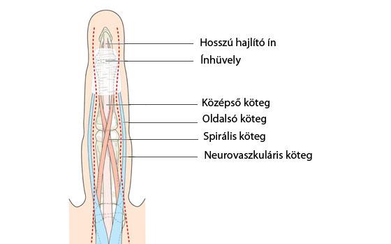 vállízület sérülések kezelése