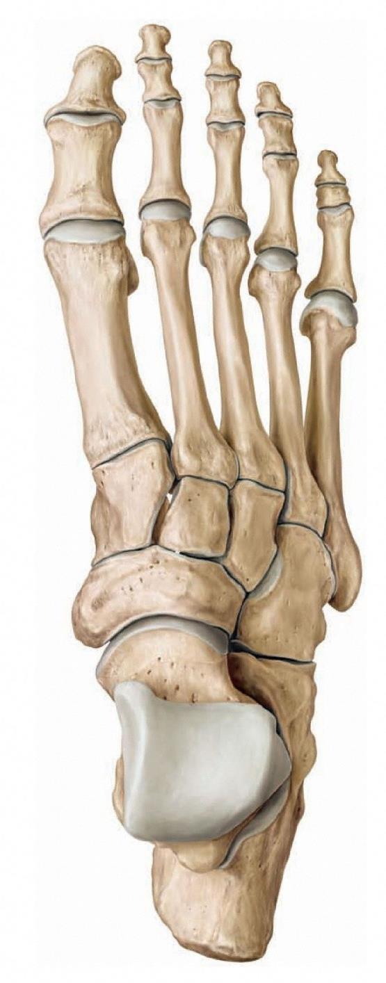 a jobb csuklóízület osteoarthrosis kezelése ízületi dysplasia kezelési rendje