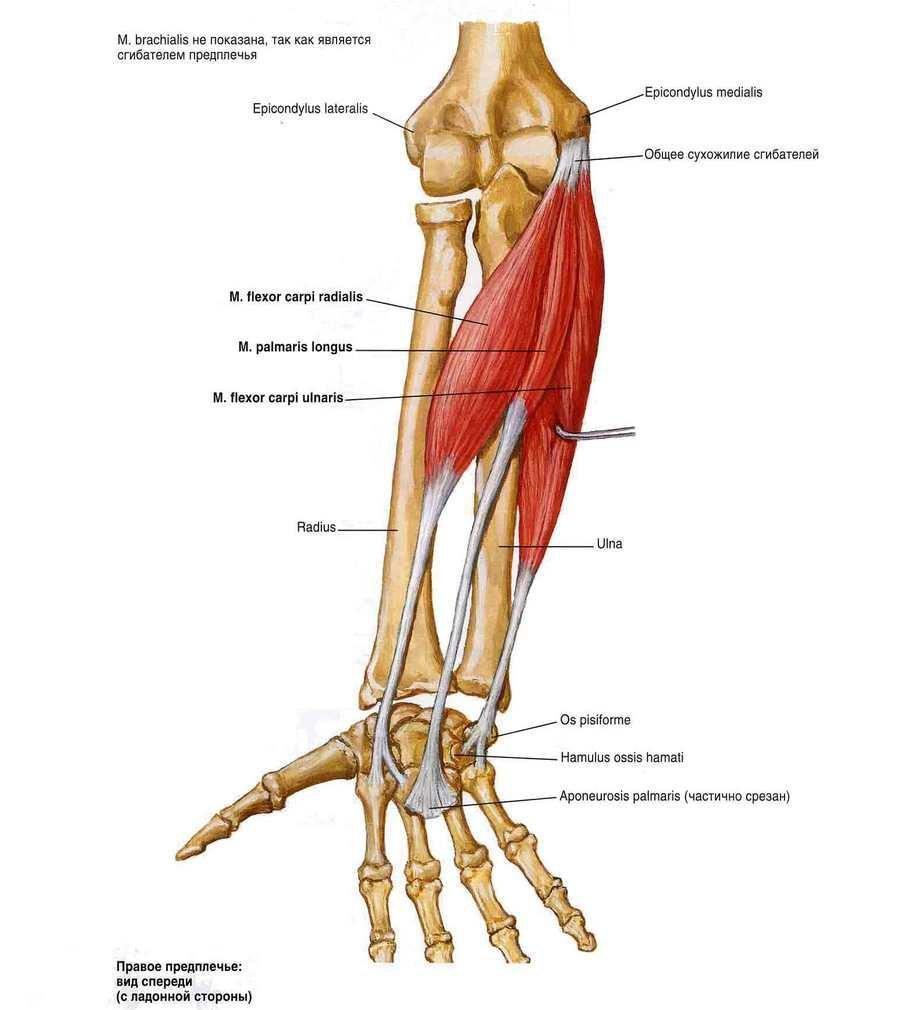Miért fáj az ischiális csontok ülése közben - Masszázs -