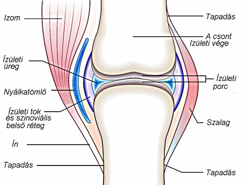 a térd szalagjai gyulladásának kezelése amelyből az ízületek viszont fájnak