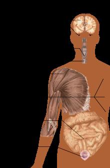 csípő neuritis kezelése térdízület ízületi zsákjának bursitis gyulladása