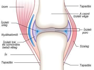 mi a különbség az artrózis és az ízületi gyulladás között