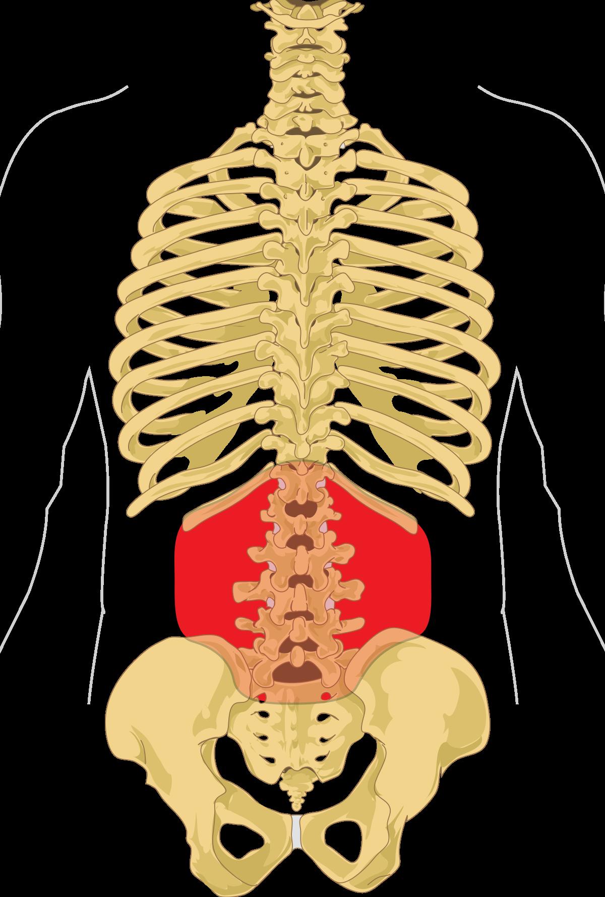 fájdalom a nagy ízületekben és a gerincben