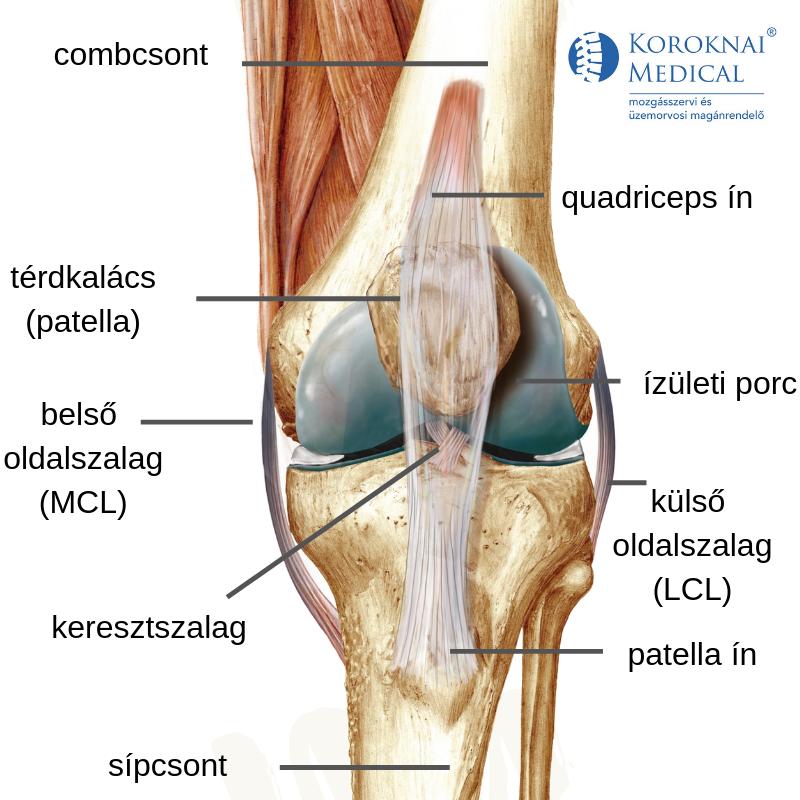 hideg térdízület kezelése ízületi fájdalom és ureaplasma