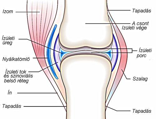 hideg térdízület kezelése ízületi gyulladás coxarthrosisban