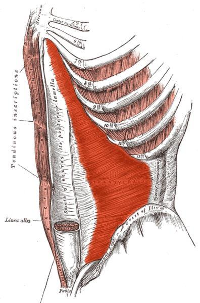 fájó láb az alsó lábszár ízületében