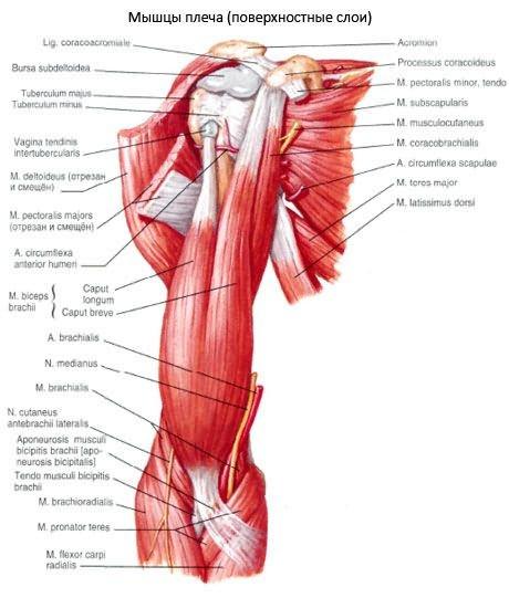 krónikus károsodás a vállízület kötőelemeiben ízületi fájdalom tünete