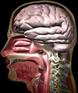 Fül-orr-gégészeti betegségek és fejfájás