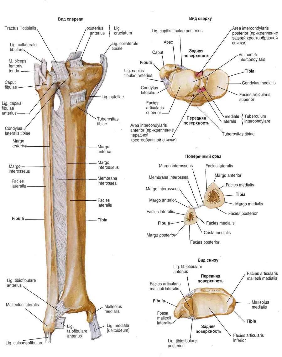 a vállízület forgórészének mandzsetta károsodása tömöríti a kéz ízületi fájdalmait