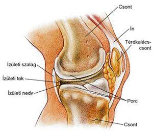 a lábízület fájdalmának kezelése nagy ízületek osteochondroze