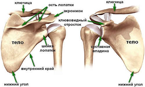 deformáló artrózis a vállízület mi ez artrózis a könyökízület 1. fokozatában