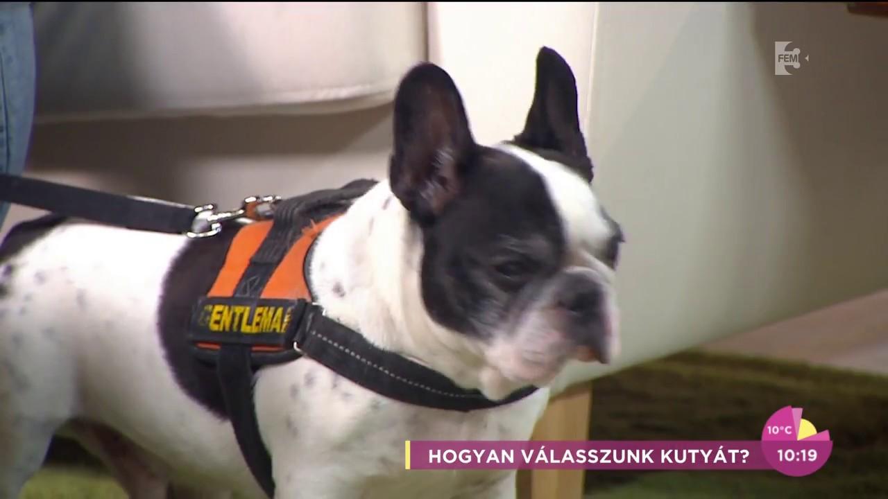 kutya ízületi jogorvoslatok