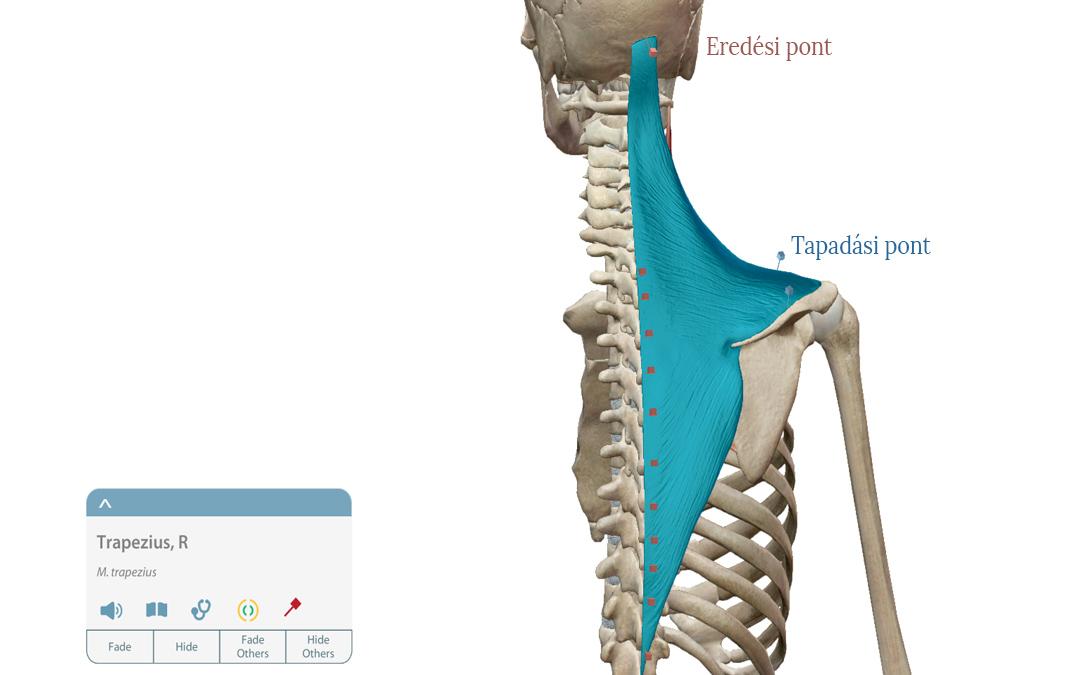 lehet úszni a bokaízület artrózisával a movalis az artrózis kezelésében